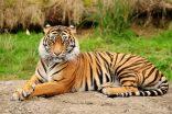 Tips Foto di Kebun Binatang dengan Kamera Favorit Anda
