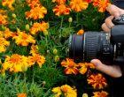 Tips Memotret Bunga