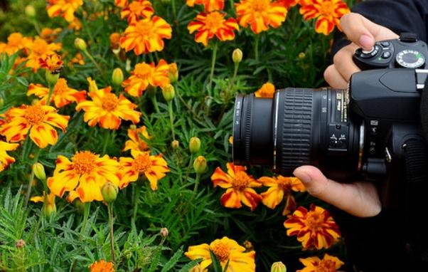 bunga bunga cam